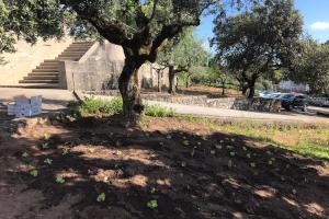 O nosso colégio tem mais uma horta
